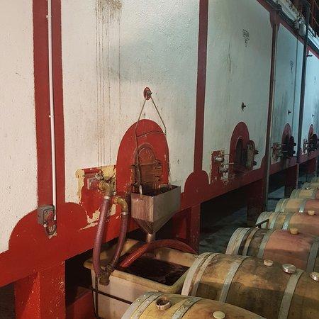 au cœur des chais des vignobles Terrassous à Fourques