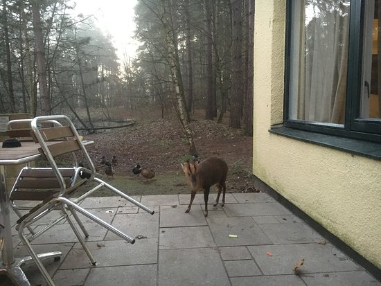 Center Parcs Elveden Forest Outside Back Door Lake Is 30ft From Doors