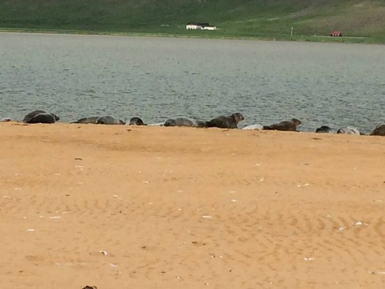 Latrabjarg, Iceland: The seals don't let you get too near, but you can still get a good look at them.