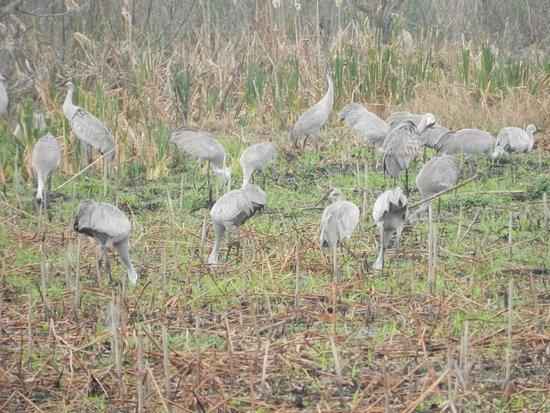 Micanopy, FL: Pássaros