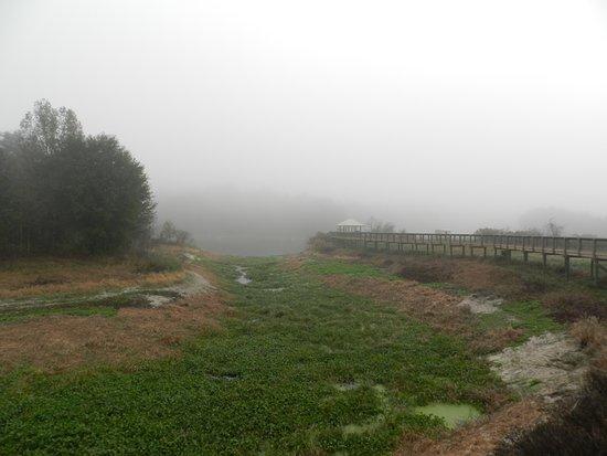 Micanopy, FL: Caminho elevado