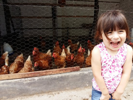 Brandsen, Argentina: El gallinero!