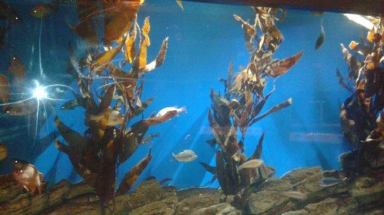 Picture Of Cabrillo Marine Aquarium