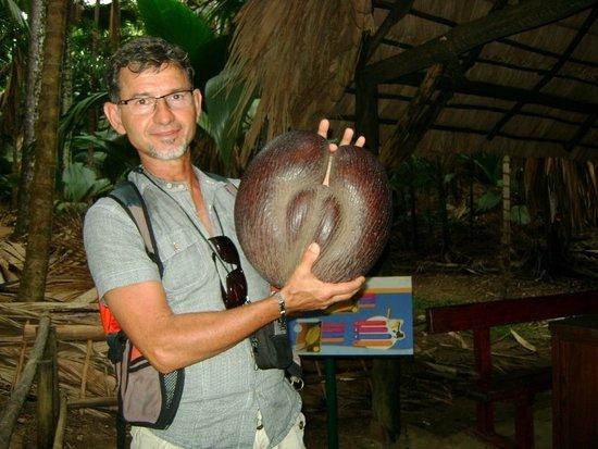 voilà Le Coco de Mer ou Coco Fesse à Praslin ( hotel Acajou Beach Resort bien située )