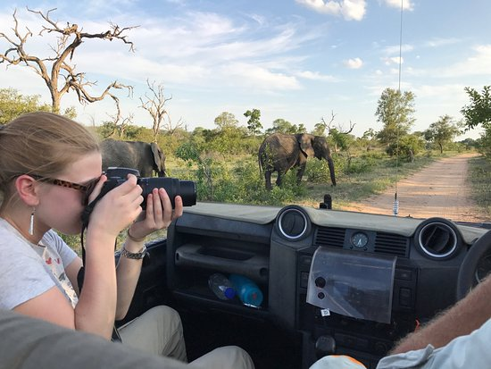 Mala Mala Private Game Reserve, Sudáfrica: a photographer's dream