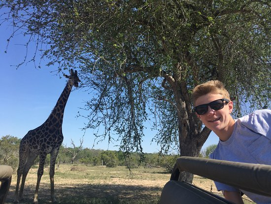 Mala Mala Private Game Reserve, África do Sul: giraffe selfie