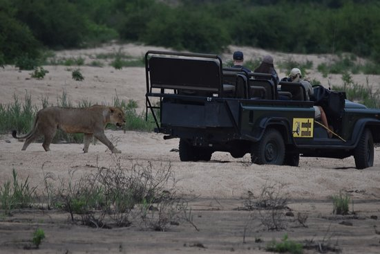 Mala Mala Private Game Reserve, Sudafrica: close encounters