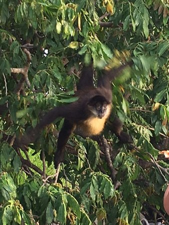 Playa Hermosa, Costa Rica: Monkey from the boat tour