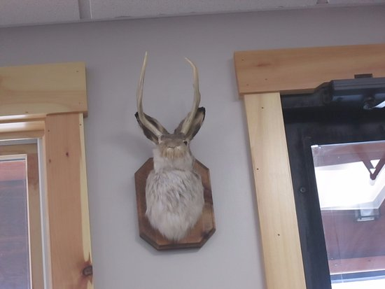 Tamworth, NH: Jackalope!