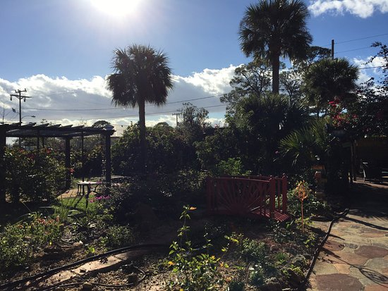 Casa Coquina Bed and Breakfast: Garden