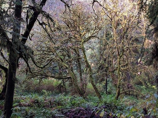 Orick, CA: Prairie Creek Redwoods State Park