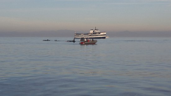 Adventure R I B Rides San Diego Ca Top Tips Before You Go Tripadvisor