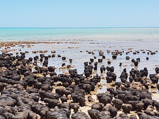 Denham, Australia: Hamelin Pool Marine Nature Reserve