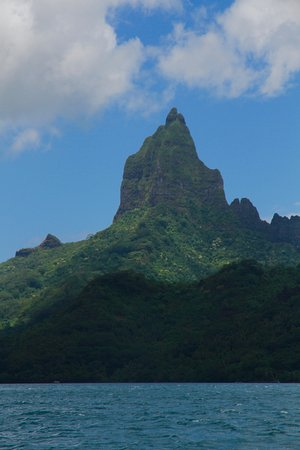 Moorea Boat Tours : Snorkelling with black tip reef sharks and stingrays off Moorea