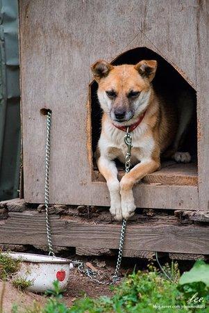 Kamifurano-cho, Japan: 숙소에 있던 강아지, 외에 여러 동물이 있습니다.