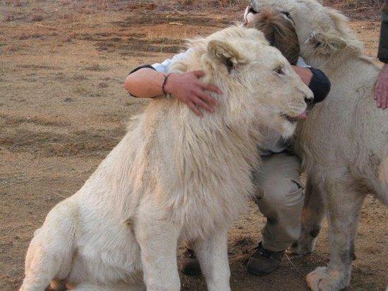 Waterberg, Νότια Αφρική: White Lion bonding