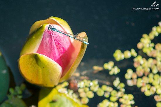 Makubetsu-cho, Japan: 잠자리 연못에서 찍은 사진.