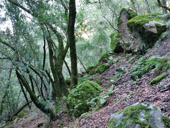 Kenwood, CA: Sugarloaf Ridge State Park