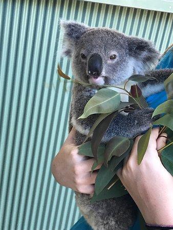 Byford, Αυστραλία: photo3.jpg