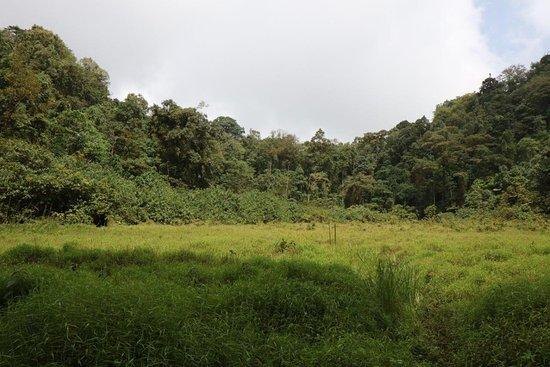 São Tomé, São Tomé e Príncipe: Lagoa de Amelia with a grass-covered surface