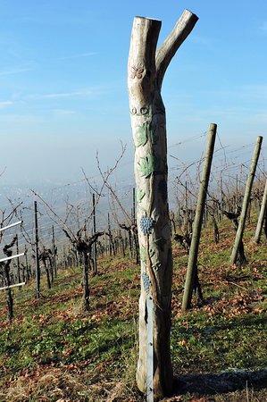 Fellbach, Alemania: Виноградники на южном склоне горы
