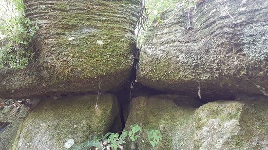 Northland Region, Selandia Baru: Rocks in bush walk