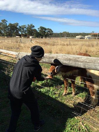 Kingaroy, Australien: Lee Farm Stay Cottages