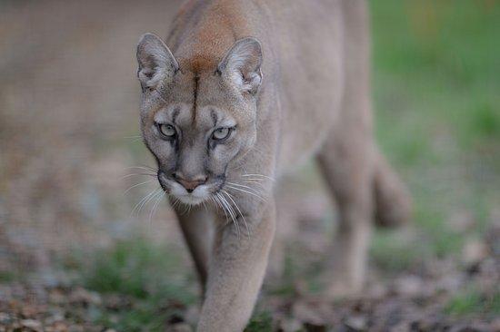 Big Cat Sanctuary Lodges