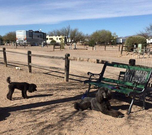 เบนสัน, อาริโซน่า: Dog Park