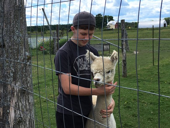 Bristol, Kanada: Willow Lane Alpacas