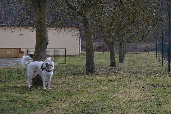 Gualdo Tadino, Italy: Area cani