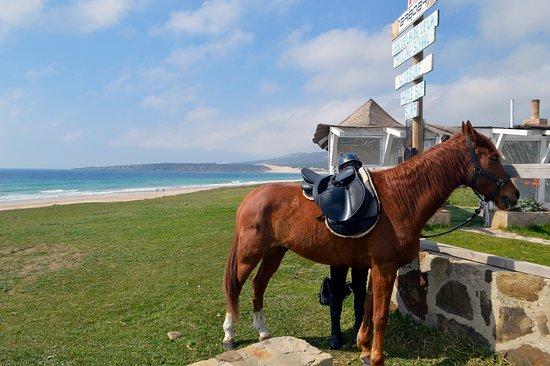 E3 Endurance Equestrian Experience