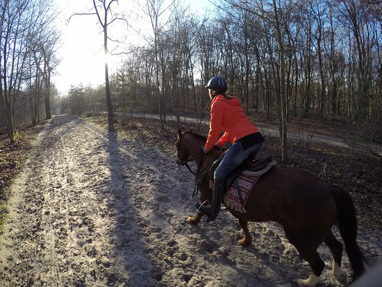 Gif-sur-Yvette, Francja: Broad bridle paths for cantering and still beautiful even in December