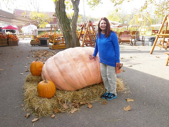 Peninsula, OH: 1328 pounds of pumkin