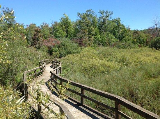 Port Austin, MI: Huron County Nature Center Boardwalk