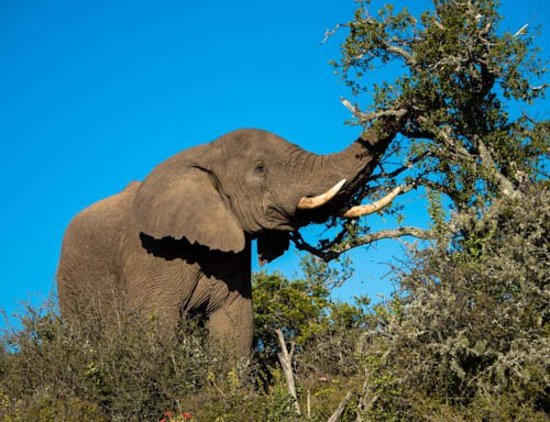 Kwandwe Private Game Reserve, South Africa: photo2.jpg