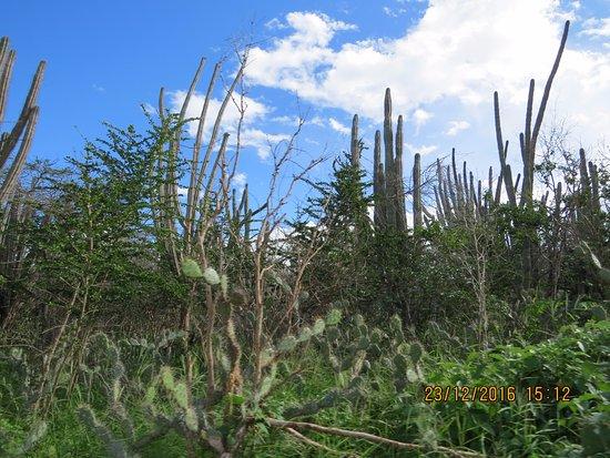 Washington-Slagbaai National Park, Bonaire: cactos