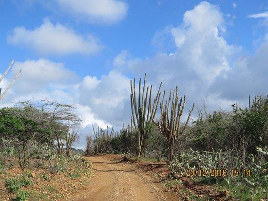 Washington-Slagbaai National Park, Bonaire: estrada