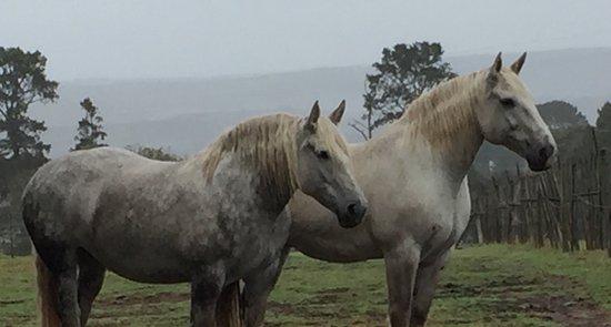 Outeniqua Moon Percheron Stud and Guest Farm: photo4.jpg