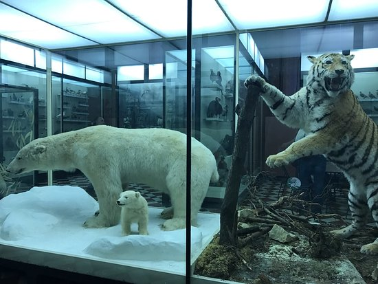 Zoological Museum of Moscow State University