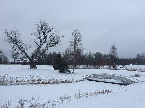 Otepaa, Estonie : Winter oak