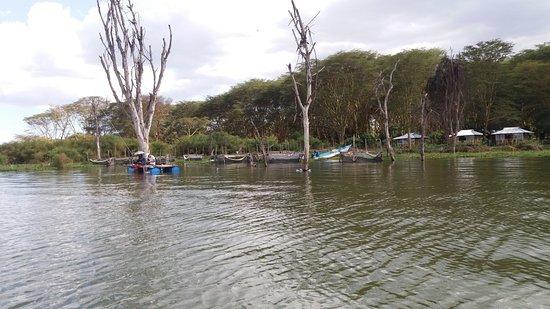 Rift Valley Province, เคนยา: Paseo en barco por el lago