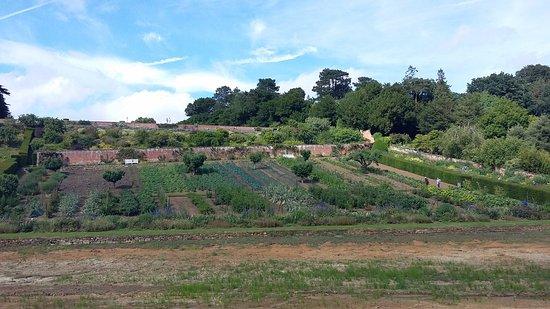 Banbury, UK: vegetable garden