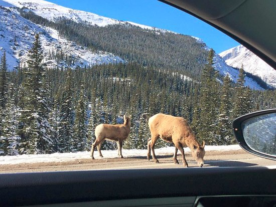 Mount Royal Hotel - TEMPORARILY CLOSED: Drive to Banff