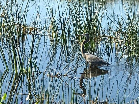 Indian River County wetlands