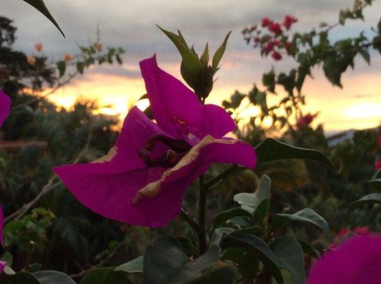 Santa Ana Picture