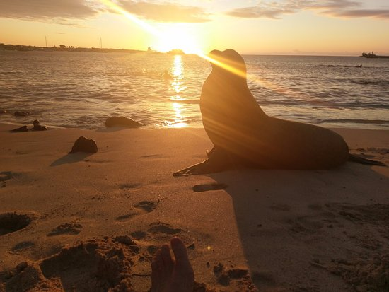 San Cristobal, Ecuador: hanging with sea lions on one of the beaches in town.