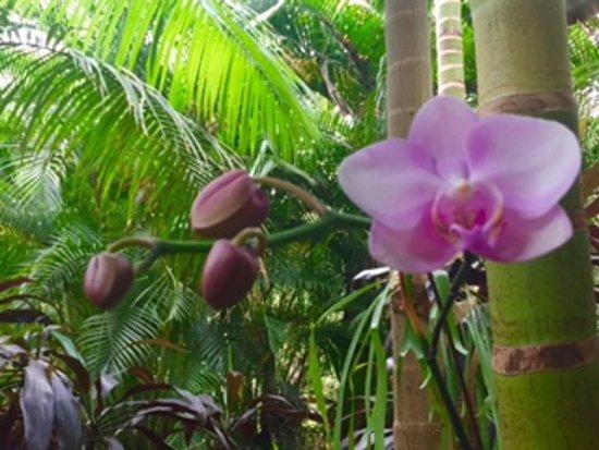 Ikatan Balinese Spa & Gardens : beautiful orchids in ikatan gardens