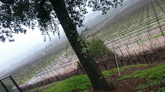 Healdsburg, CA: DSC_0065_large.jpg