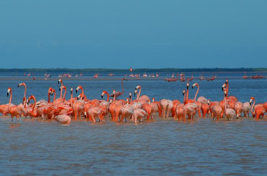 Ek Balam, Pink Flamingoes Sanctuary...